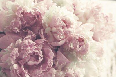 Naklejka Puszyste różowe peonie kwitną tło