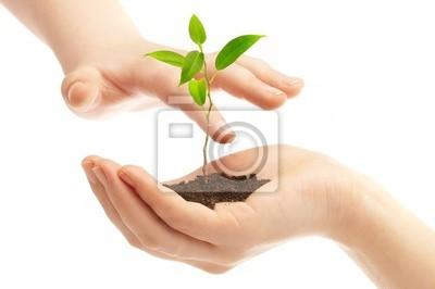 rąk ludzkich i młodych roślin