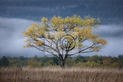 rano krajobraz z drzewa i mgły