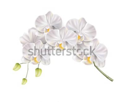 Naklejka Realistyczna gałąź kwiat białej orchidei z pąkami na łodydze. Eleganckie zaproszenie na ślub, projekt dekoracji salonu spa. Wektor zaproszenie karta małżeństwa, element romantyczny wydarzenie. Wiosenn