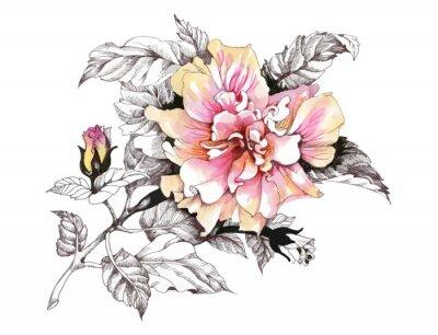 Ręcznie rysowane akwarela różowy kwiat na białym tle.
