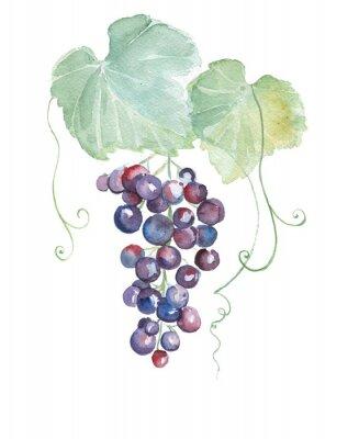 Naklejka Ręcznie rysowane ilustracji akwarela fioletowych winogron