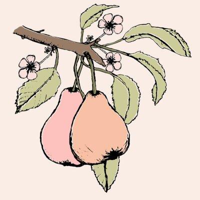 Naklejka Ręcznie rysowane oddział z parą gruszek, kwiatów i liści