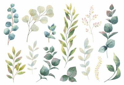 Naklejka Ręcznie rysowane wektor zestaw akwarela ziół, kwiatów i przypraw.