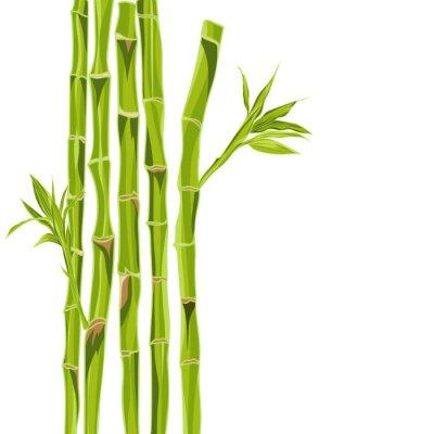 Naklejka Ręcznie rysowane zielony bambus bacground z miejsca na tekst
