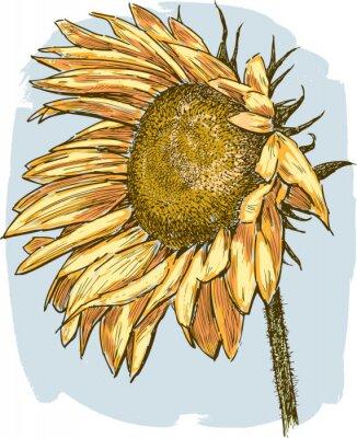 Naklejka ripe sunflower