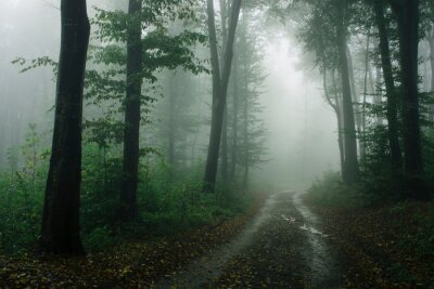 road in forest on rainy day with fog