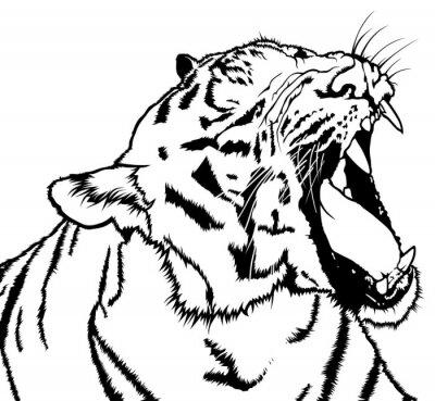 Naklejka Roaring Tiger - czarno-biały rysunek ilustracji wektorowych