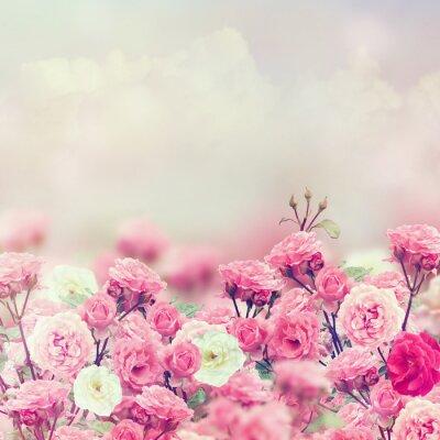 Naklejka Rose Kwiaty