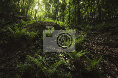 roślinność w naturalny zielony las w lecie