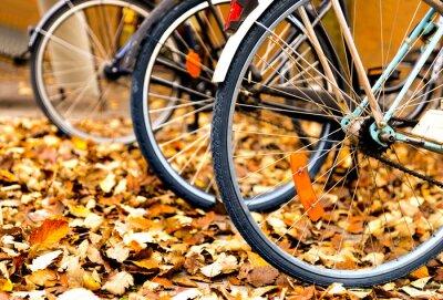 Naklejka rowery w jesiennych liści
