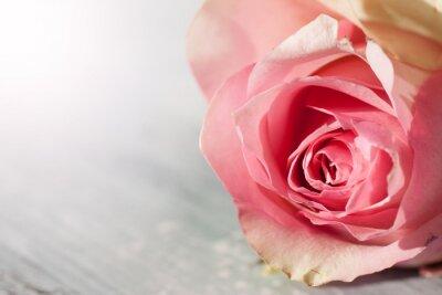 Naklejka Róże Martwa natura