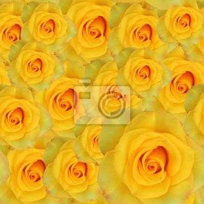 Naklejka Róże żółte tło