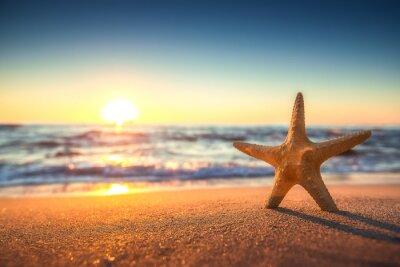 Naklejka Rozgwiazdy na plaży o wschodzie słońca