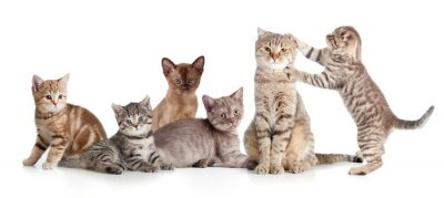 Naklejka Różne koty grupa izolowane