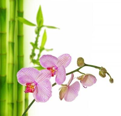 Naklejka różowa orchidea i bambus - tło spa