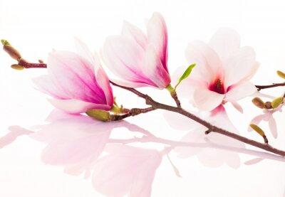 Naklejka Różowe kwiaty z refleksji