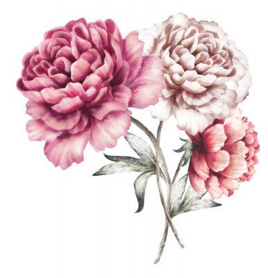 Naklejka różowe piwonie. kwiaty akwarela. kwiatowy w kolorach pastelowych. bukiet kwiatów samodzielnie na białym tle. Liść. Romantyczna kompozycja na ślub lub kartkę z życzeniami.