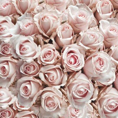 Naklejka Różowy rocznika róże