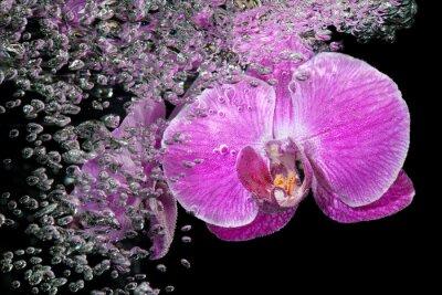 Naklejka Różowy tropikalnych storczyków pod wodą