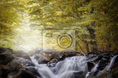 Rzeka w lesie z złote liście jesienią