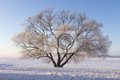 Samotny mroźny drzewo na śnieżnej łące. Zimowa scena natury. Miękkie światło słoneczne oświetla drzewo na śniegu. Boże Narodzenie tło. Naturalny park zimowy.