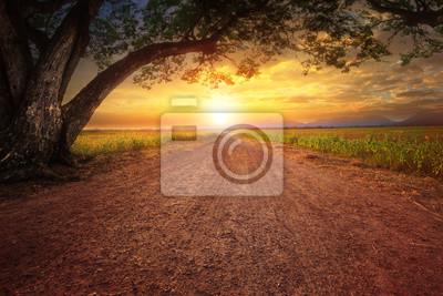 Naklejka Scape krajobrazu drogowego dustry na scenie wiejskiej i big drzewa deszczowego roślin przed piękne niebo słońca używać dla naturalnego tła