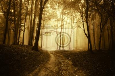 Scena horror z drogi przez złotym lesie z ciemnego drzewa