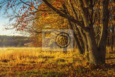Sceneria jesień tło. Niesamowity widok na dziką jesienną naturę. Żółci drzewa na złotej łące. Piękny krajobraz kolorowy Październik w słoneczny dzień. Spadek.