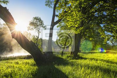 Sceneria lata natury krajobraz zielona trawa i drzewa na brzeg rzeka w ranku z jaskrawym słońcem przez bagażnika drzewo. Wyczyść słoneczny dzień z jasnym słońcem. Natura w słońcu. Scena wiejska.