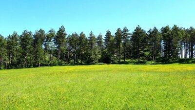 Naklejka Scenic View Of Field Against Clear Sky