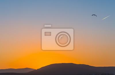 Seagull latanie w jasnym niebie w Sardinia przy zmierzchem