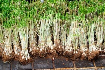 Naklejka Seedlings of Welsh onion at the street market.