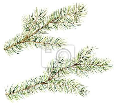set Akwarela gałęzi choinki. Ręcznie malowane ilustracji z fir-igłowych naturalnych elementów wyizolowanych na białym tle. Zima naturalnym elementem projektu, druku lub tła.