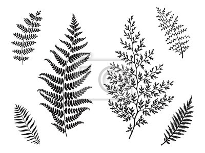Set of beautiful leaves silhouettes, hand drawn vector illustration. Template for your design.