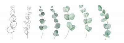 Naklejka Set of differents eucalyptus branches on white background. Watercolor, line art, outline illustration.