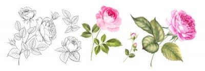 Naklejka Set of differents roses on white background. Watercolor, line art, outline illustration.