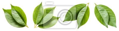 Naklejka Set of green leaves, isolated on white background