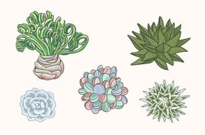 Set of hand drawn succulents cactus