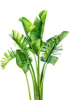 Naklejka set of jungle leaves, strelitzia on an isolated white background, botanical illustration, watercolor tropical plants