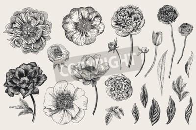 Naklejka Set of Spring flowers. Vintage vector botanical illustration. Black and white