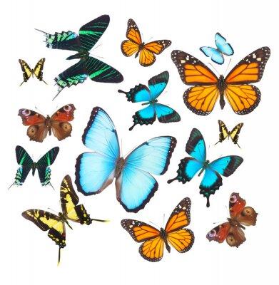 Naklejka set tropikalne motyle