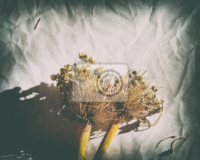 Naklejka Sia walijską cebulę na zmiętym papierowym tle tonował fotografii winietę