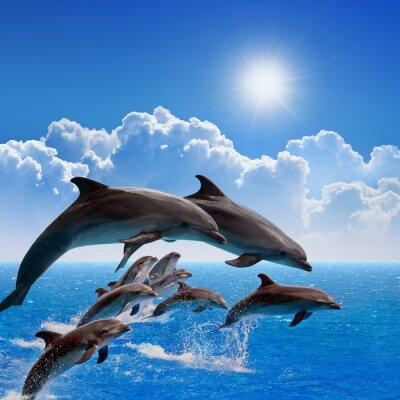 Naklejka Skoki delfinów