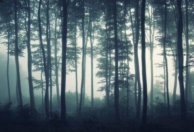 skraju lasu w mgle