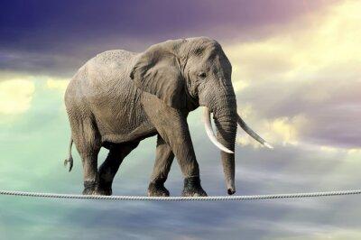 Naklejka Słoń chodzenie na linie