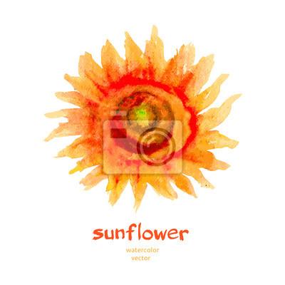 Naklejka Słonecznik akwarela na białym tle.Wektor, ręcznie rysowane ilustracji