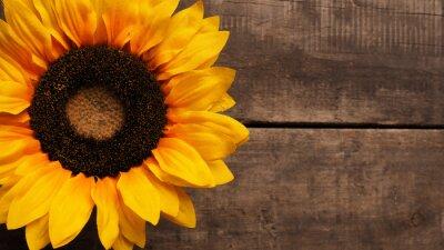 Naklejka Słonecznik na drewnie