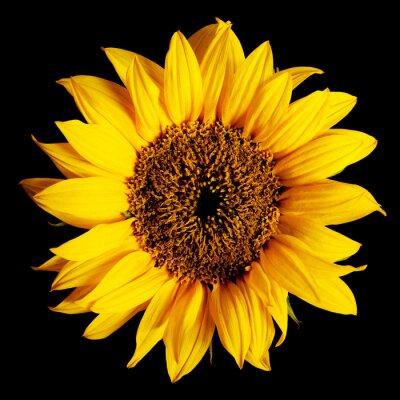 Naklejka słonecznik samodzielnie