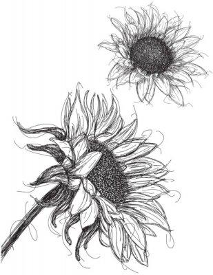 Naklejka Słoneczniki